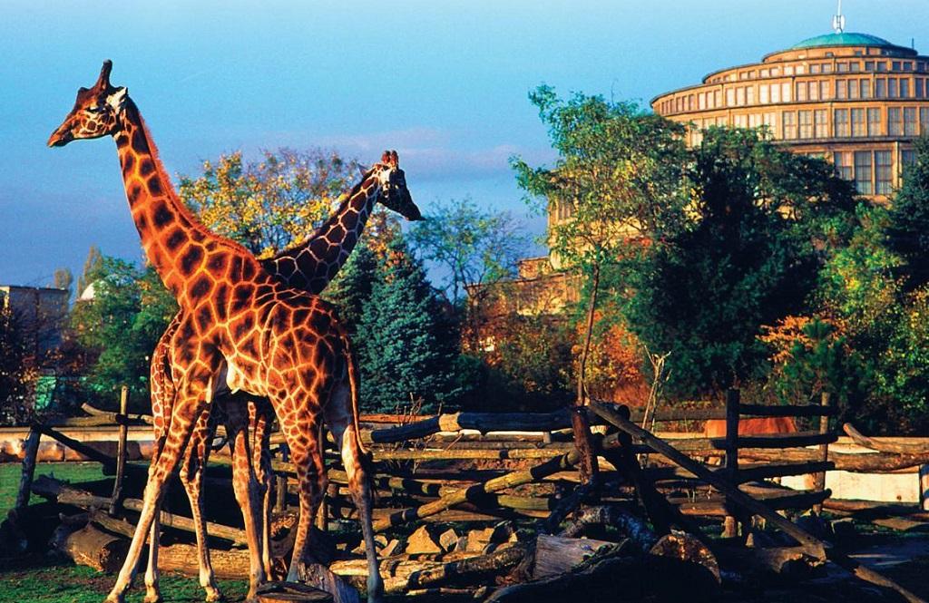 avrupa rüyası wroclaw hayvanat bahçesi